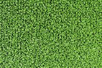Astroturf Classic Green